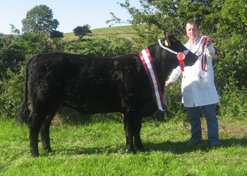 Tower_Eve_Beauty_Angus_Champion_at_Ballyshannon_Show_10_pic_with_Gerry_Lenehan_Rathlee_Easkey_Co_Sligo