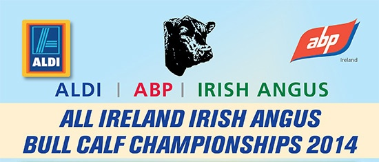 ALDI, ABP, IRISH ANGUS ALL IRELAND IRISH ANGUS BULL CALF CHAMPIONSHIPS 2014