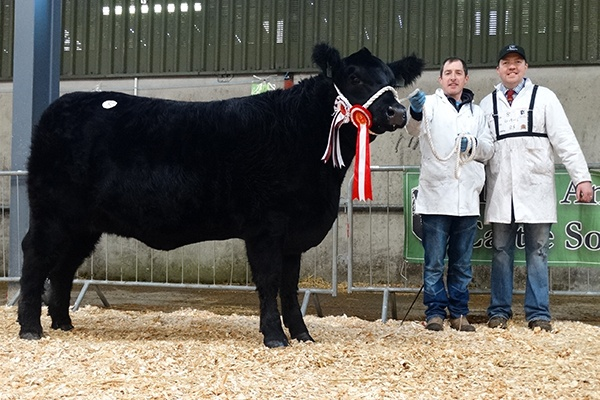Irish Angus Elite Sale December 2016