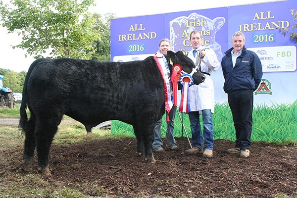 IRISH  ANGUS  CATTLE  SOCIETY –  ALL IRELAND 2016