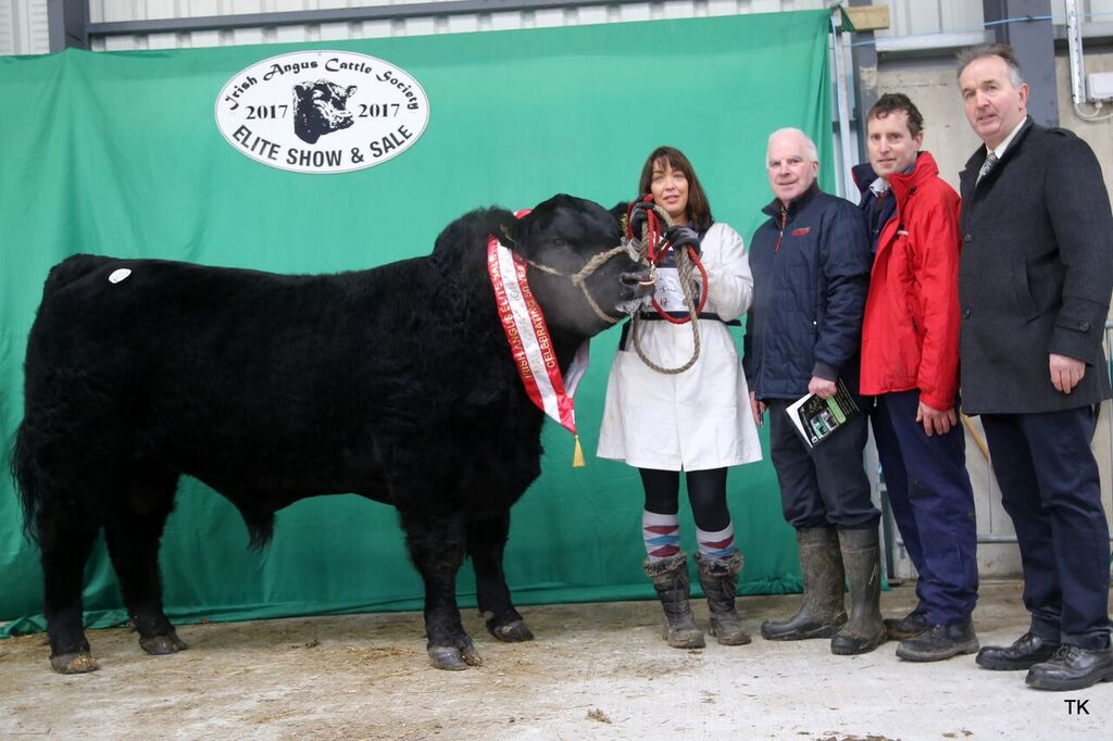 IRISH  ANGUS   ELITE  SALE  –  Ck-On-Shannon  9th December 2017