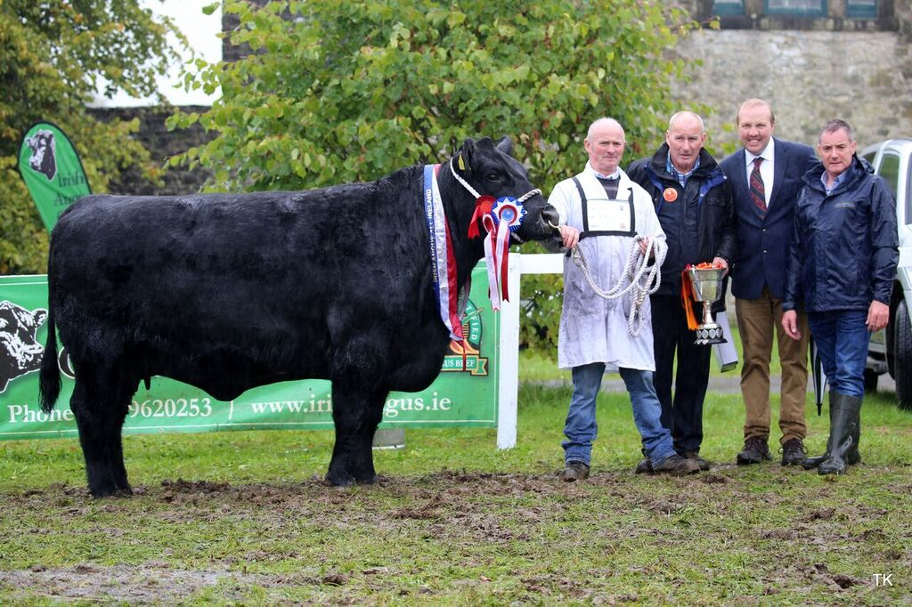 Irish Angus All Ireland Finals 2018