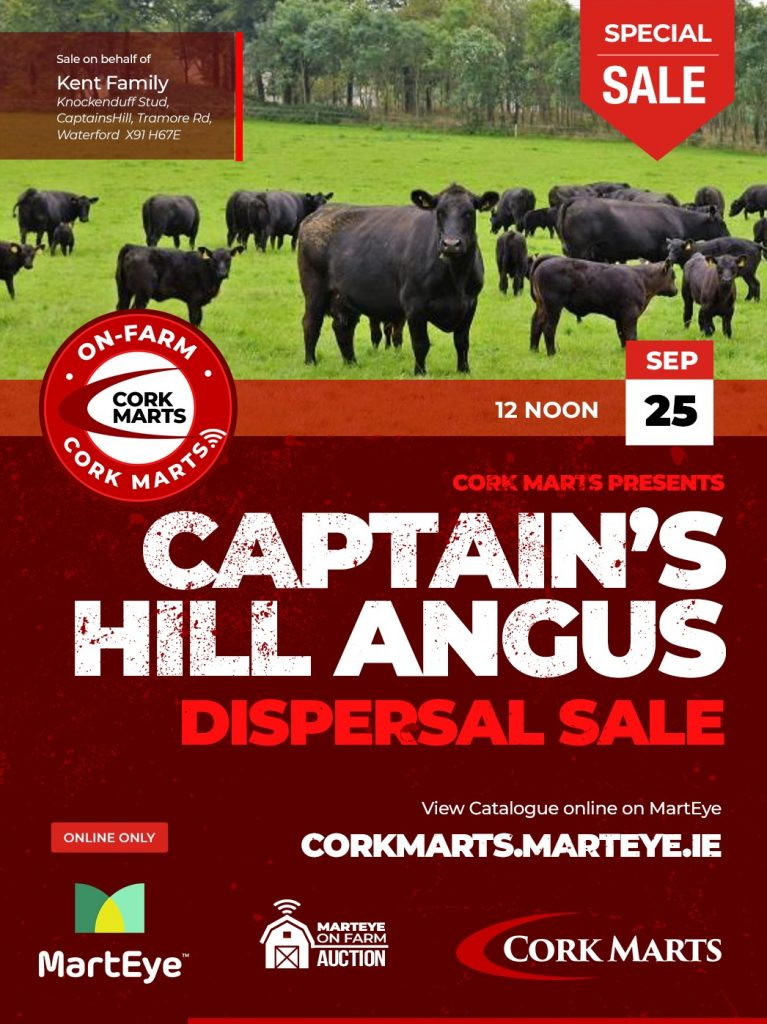 Captain's Hill Angus Dispersal Sale 25th Sept 2021