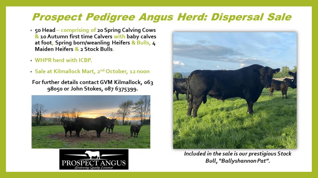 Prospect Herd Dispersal Sale 2nd October 2021