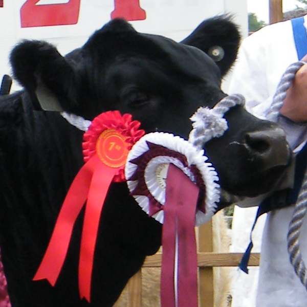 IRISH  ANGUS  CATTLE   SOCIETY  ALL  IRELAND  CHAMPIONSHIPS  2014