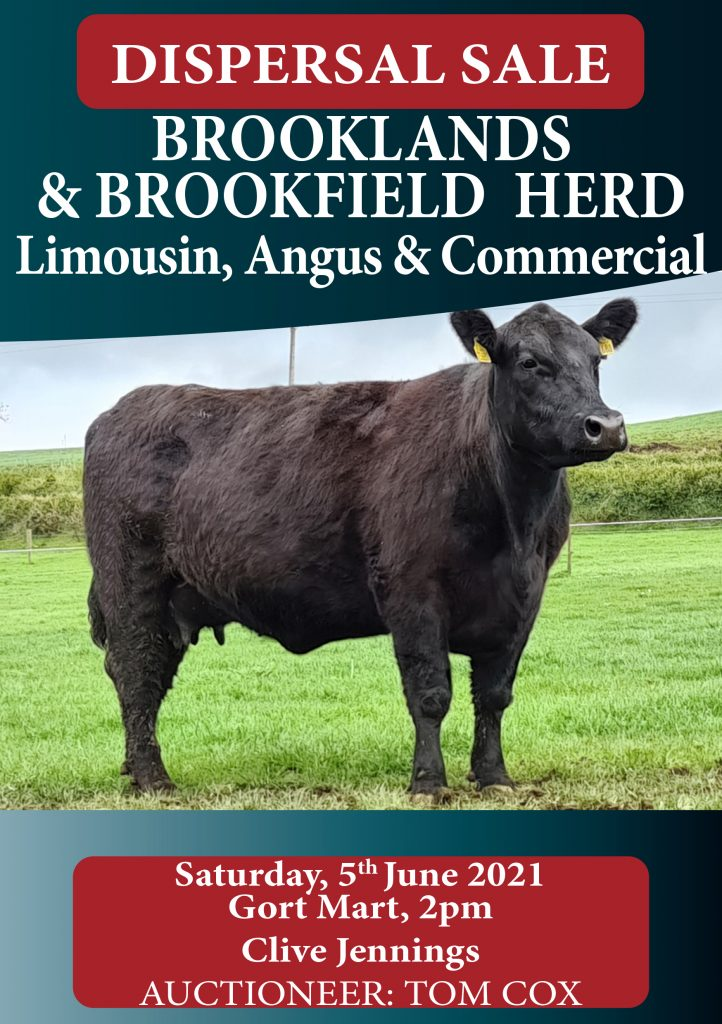 Brookfield Herd Dispersal 5th June 2021 Gort Mart